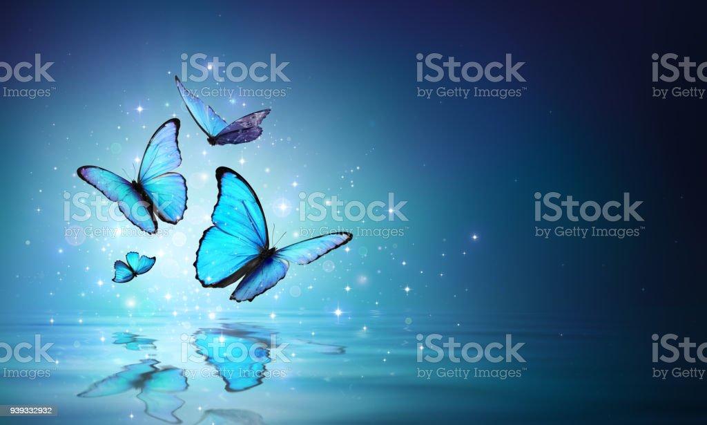 Magische Schmetterlinge auf dem Wasser – Foto