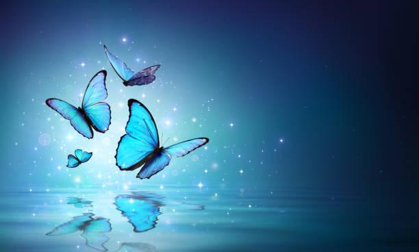 su üzerinde sihirli kelebekler - peri hayali karakter stok fotoğraflar ve resimler
