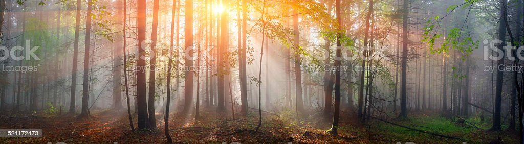 Magic Carpathian forest at dawn stock photo