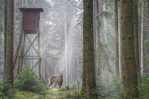 Magic deer stock photo