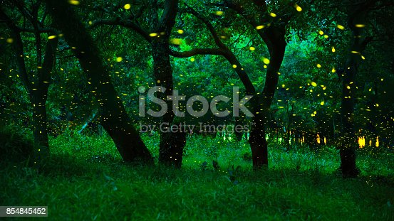 istock Magic fairy forest. Fireflies in the bush at night at Prachinburi province, Thailand 854845452