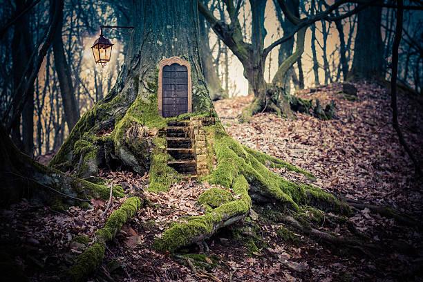 magic fairy forest - fee stock-fotos und bilder