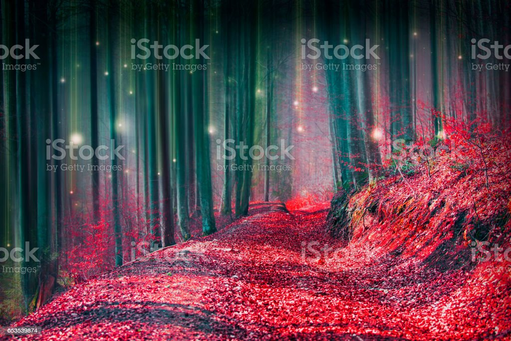 Magic fairytale forest with fireflies lights and mysterious road - foto de acervo