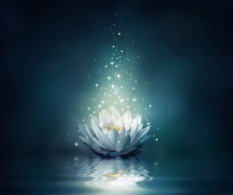 Magic Flower On Water Stock Photo - Download Image Now ...
