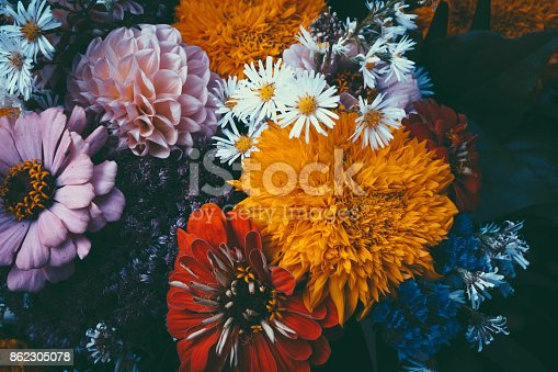 istock Magic flowers with dark leaves background. 862305078