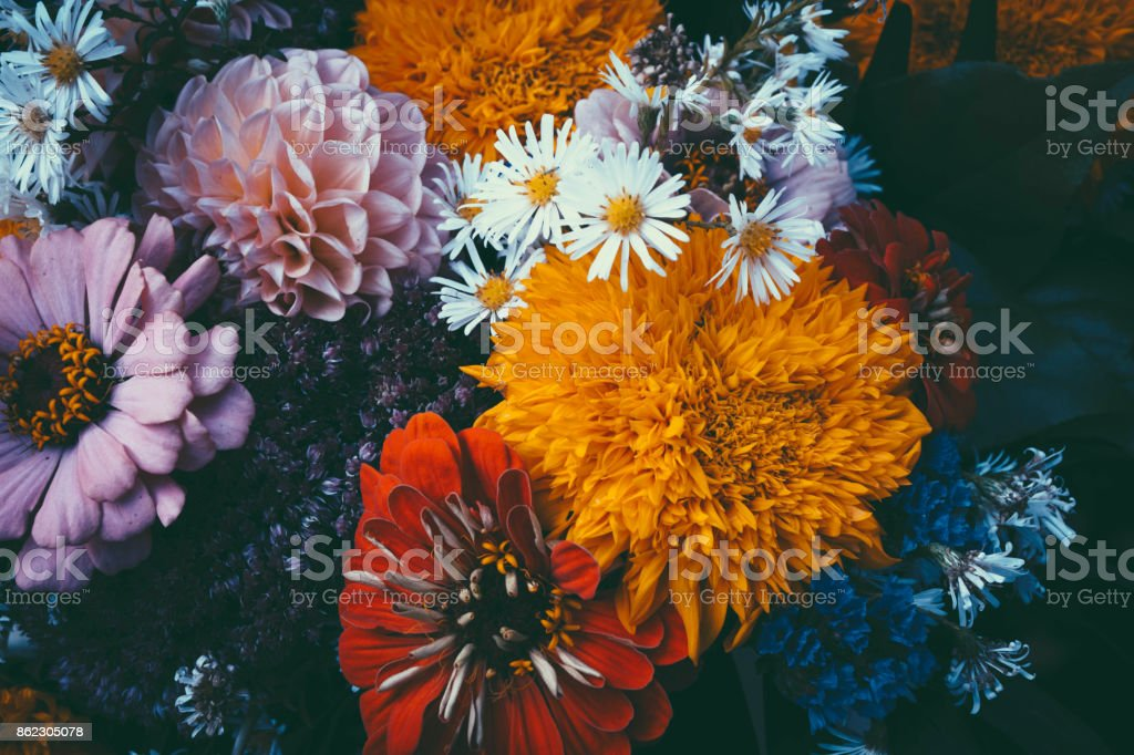 Magic flowers with dark leaves background. stock photo