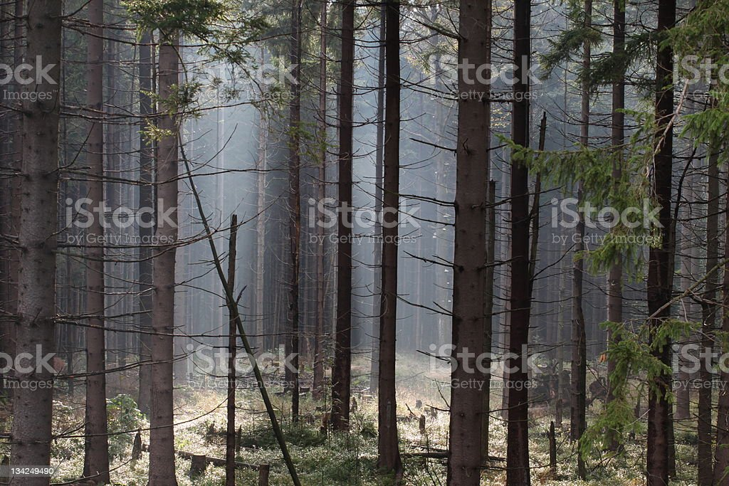 magic forest royalty-free stock photo