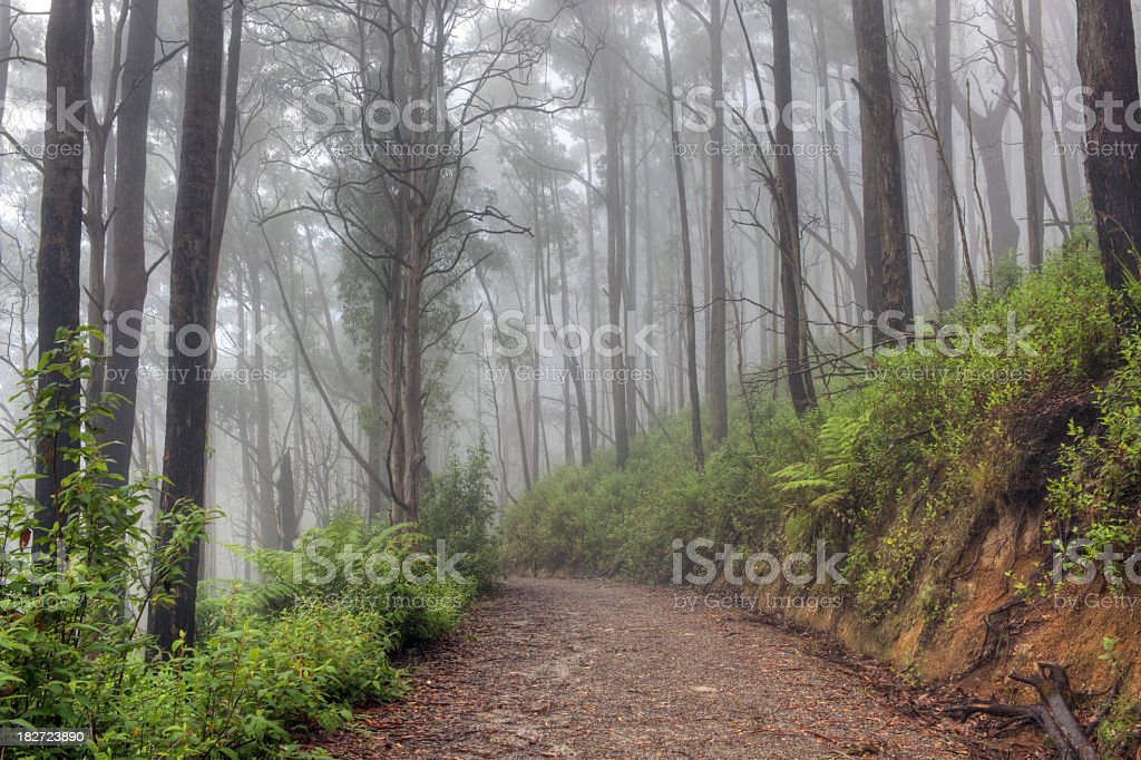 Magic forest. stock photo