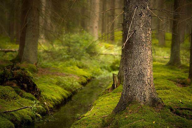Magic Wald – Foto