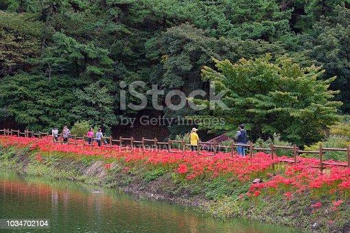 Gochang, Korea - September 19th 2017, Peoples walking the magic lily garden at Yongchunsa in Summer, Korea.