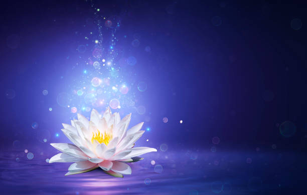 Magic Lotus Flower With Fairy Light - Miracle and Mystery Concept stock photo