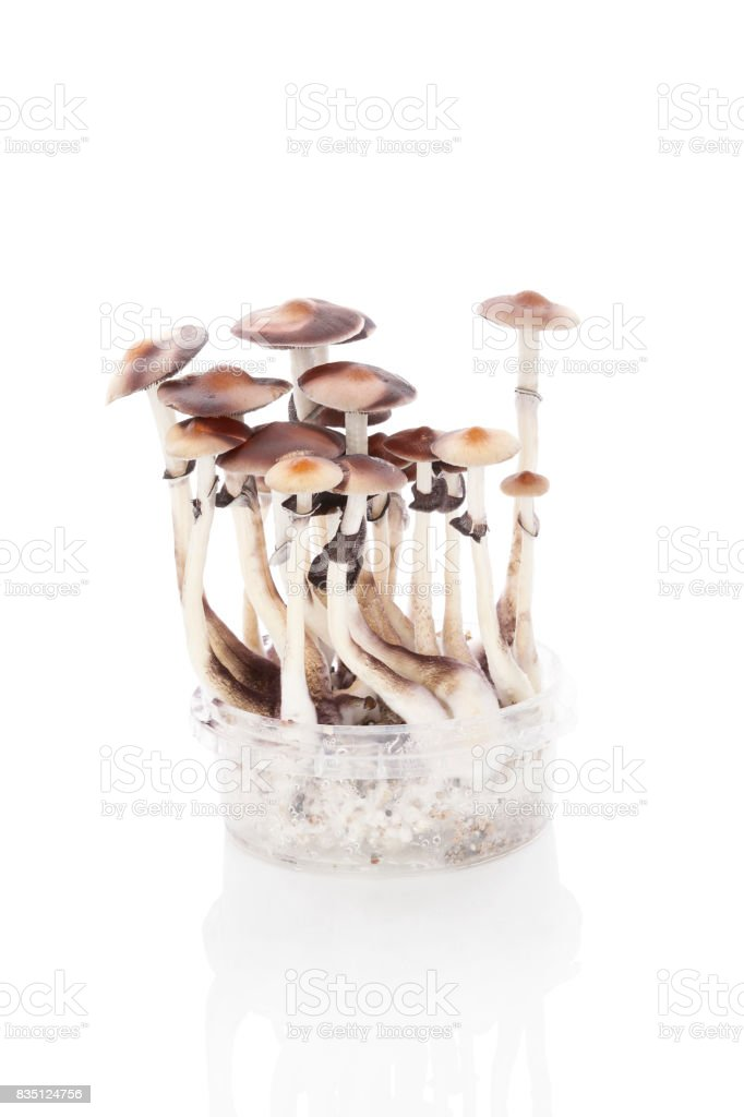 Magic Mushrooms Grow Kit Stock Photo - Download Image Now - iStock
