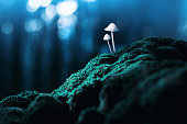 istock Magic mushrooms 1127951031