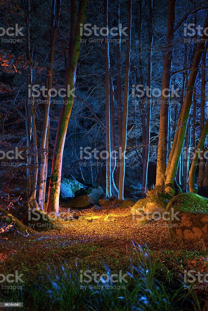 Magic night in the forest royalty-free stock photo