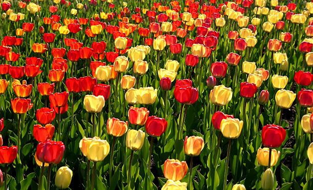 Magie des Frühling – Foto