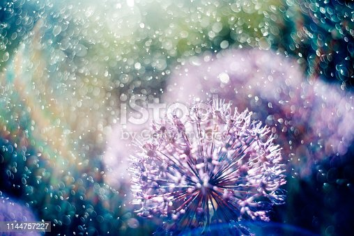Magic picture beautiful unusual purple flowers in the light rays of the rainbow in the spray and water drops. Photography with a fantastic effect of a bright cosmic flower field. Lilac abstract flowers image.