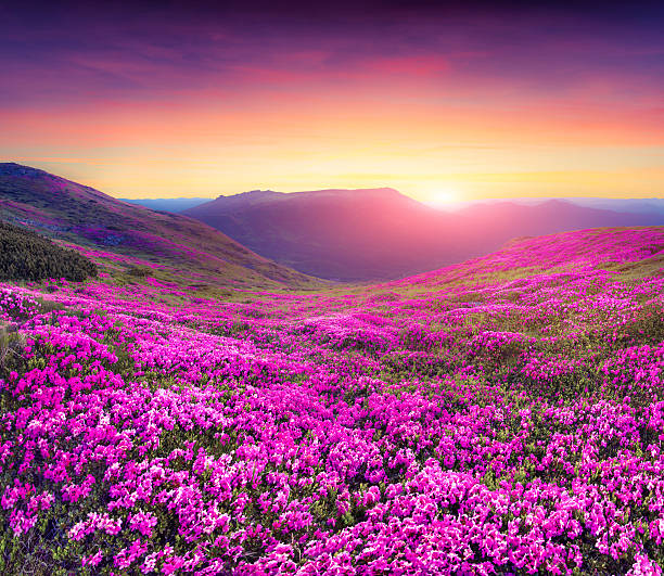 Flowers Pictures, Images and Stock Photos - iStock
