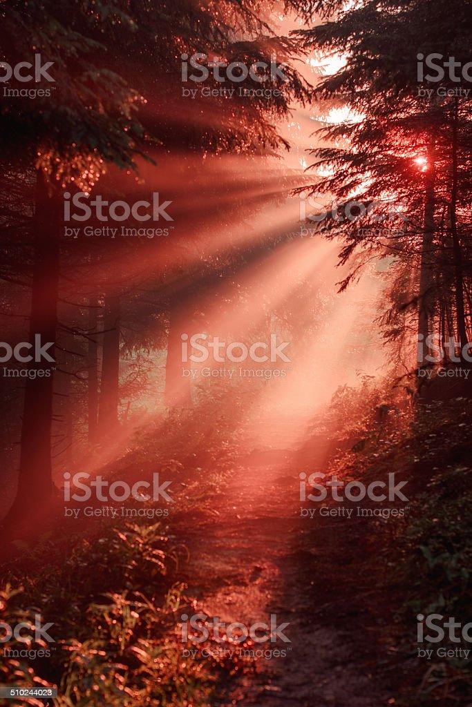 Magia de los rayos de sol en el bosque por la mañana - foto de stock