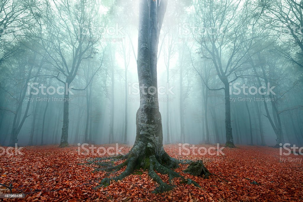 Magic tree in the middle of the foggy forest stock photo