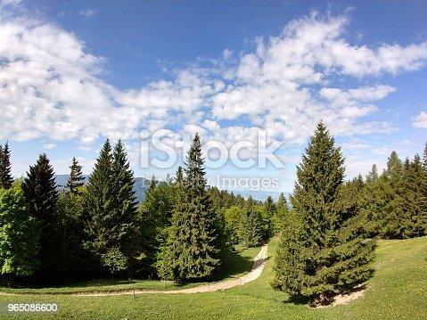Magic Trees And Paths In The Forest - Stockowe zdjęcia i więcej obrazów Bez ludzi