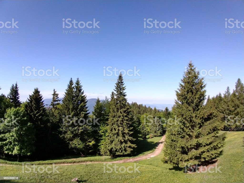 Magic trees and paths in the forest. royalty-free stock photo