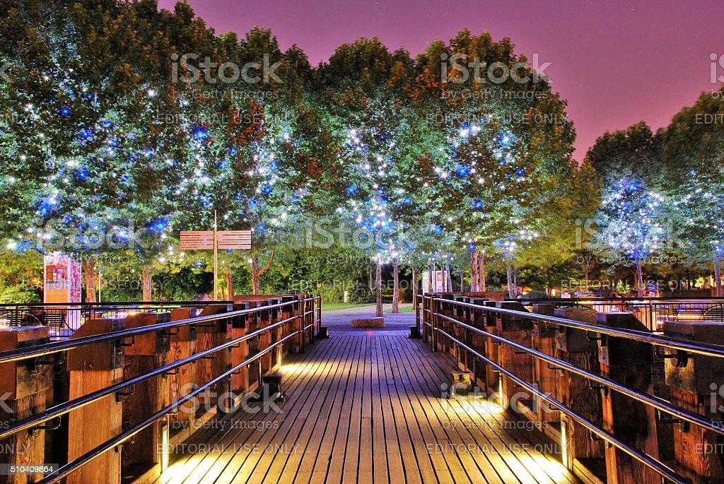 Magic Trees stock photo