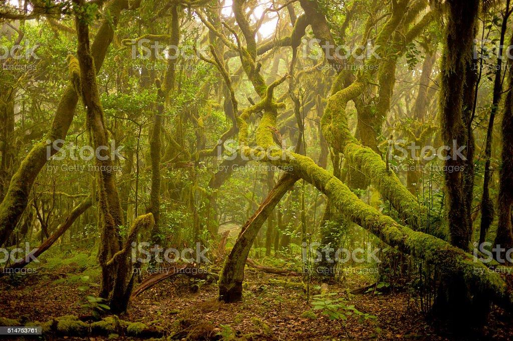 Magic vision in the National Park Garajonay stock photo