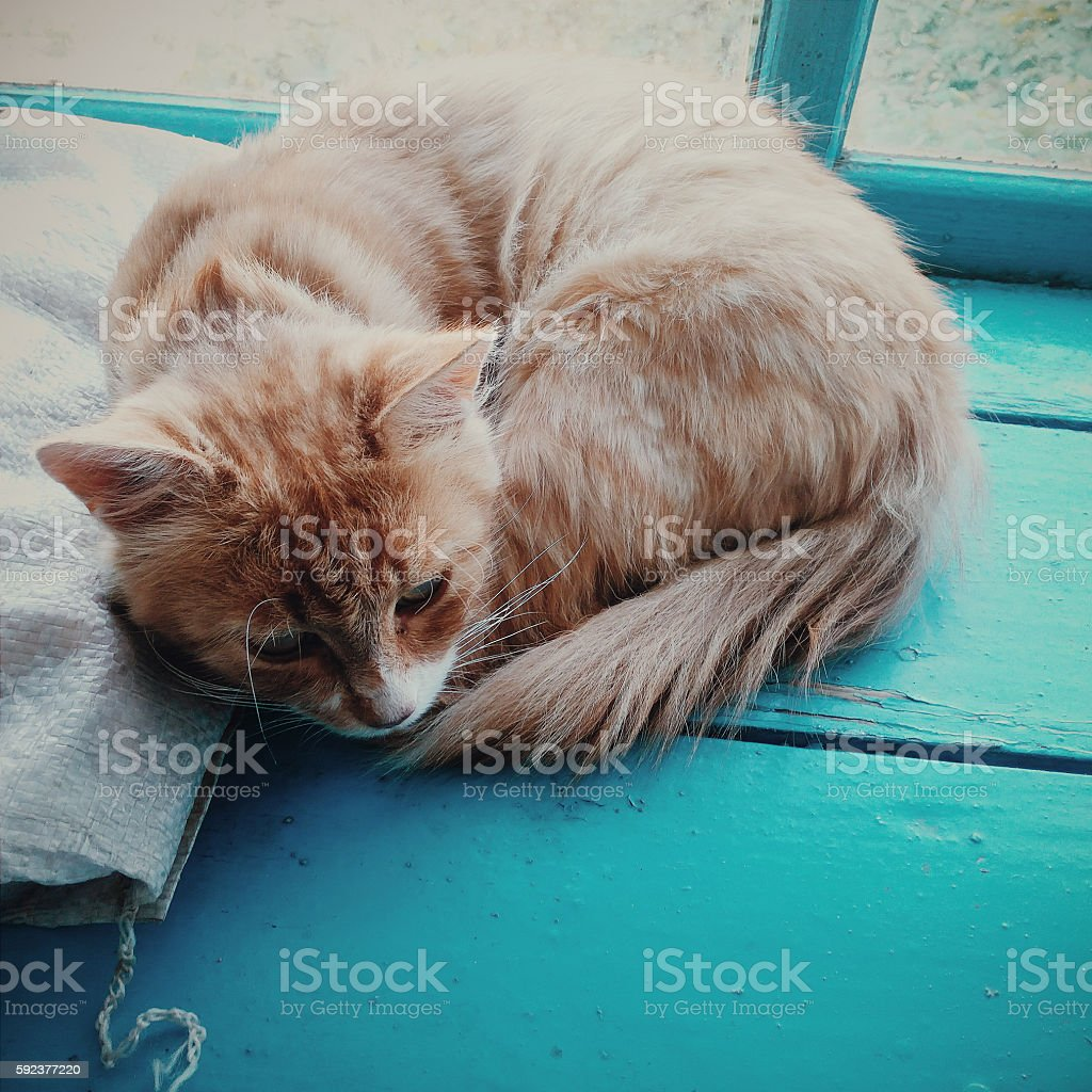 Magic Yellow Cat sits on the window royalty-free stock photo