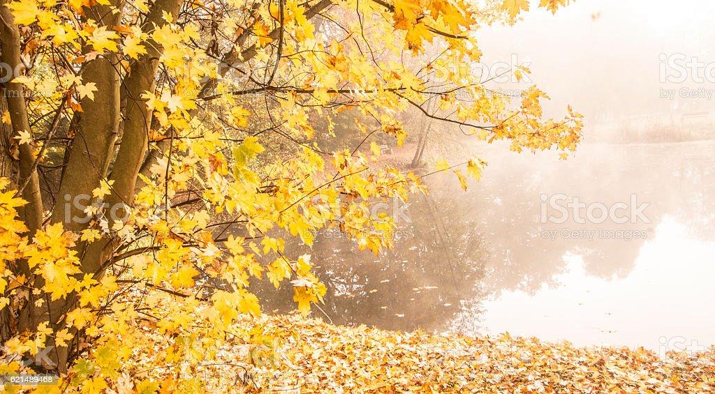 Magical autumn morning by the lake photo libre de droits