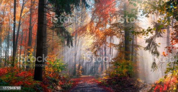 Photo of Magical autumn scenery in a misty forest