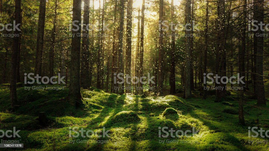 Magical fairytale forest. - Royalty-free Abeto Foto de stock