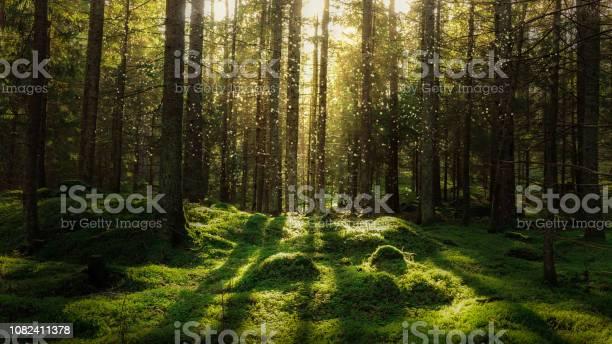 Magical fairytale forest picture id1082411378?b=1&k=6&m=1082411378&s=612x612&h=gdw6ucjf2hslzxxyhbubvlz2bjeaejs5colq15kgmfg=