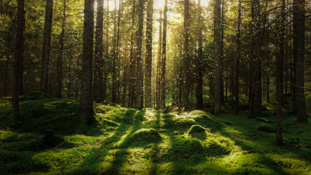 magical fairytale forest. - woodland stock pictures, royalty-free photos & images