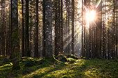 Magical fairytale forest
