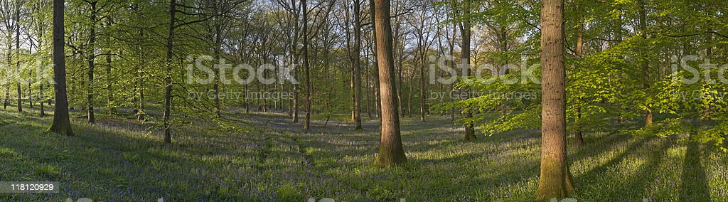 XXXL Magical forest and wild flowers royalty-free stock photo