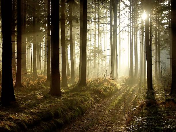 Bosque Mágico al atardecer - foto de stock