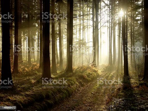 Photo of Magical forest at dusk