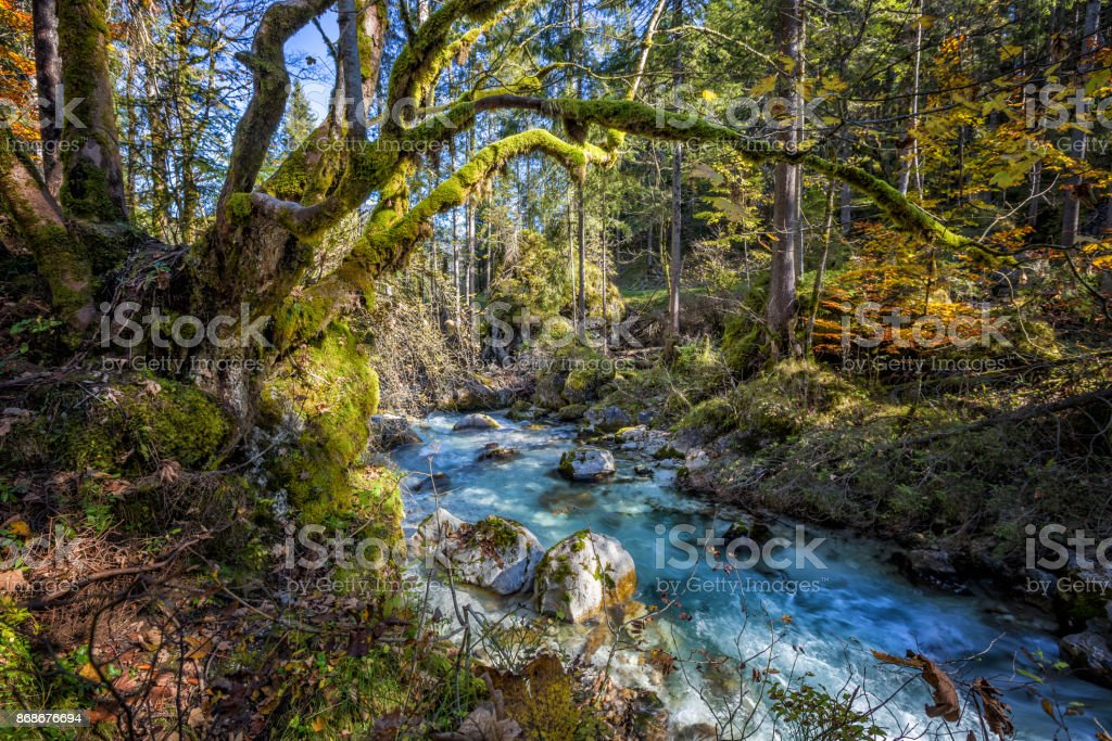 Magical Forest at Lake Hintersee with Creek Ramsauer Ache - HDR image. National Park Berchtesgadener Land, Germany. stock photo