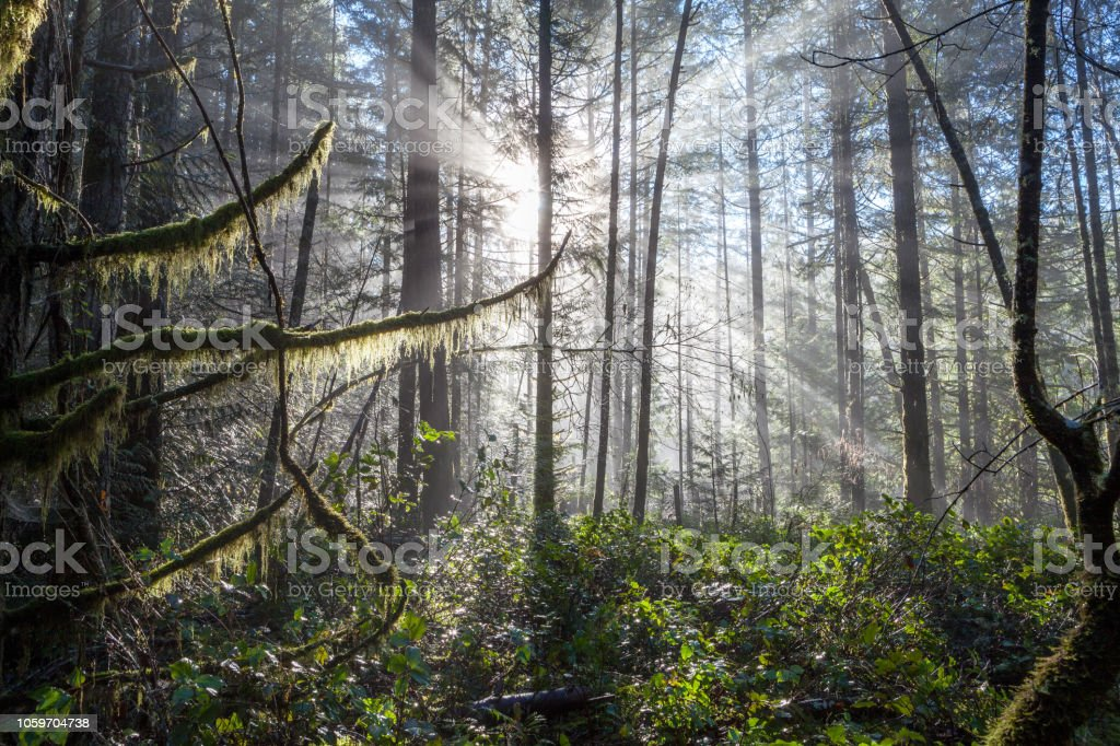 Magical forest light stock photo