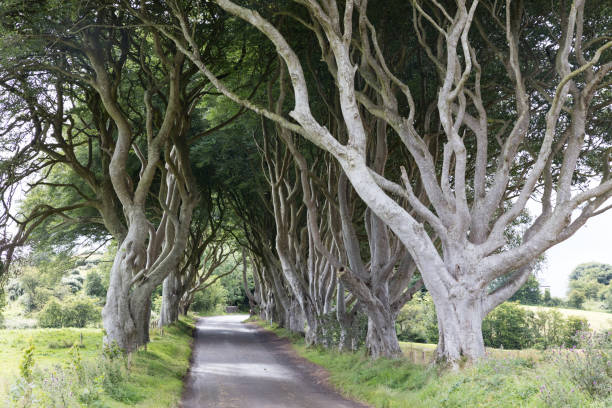Magical forest, Northern Ireland stock photo