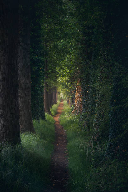 Magical forest path and tree tunnel at sunrise on spring stock photo