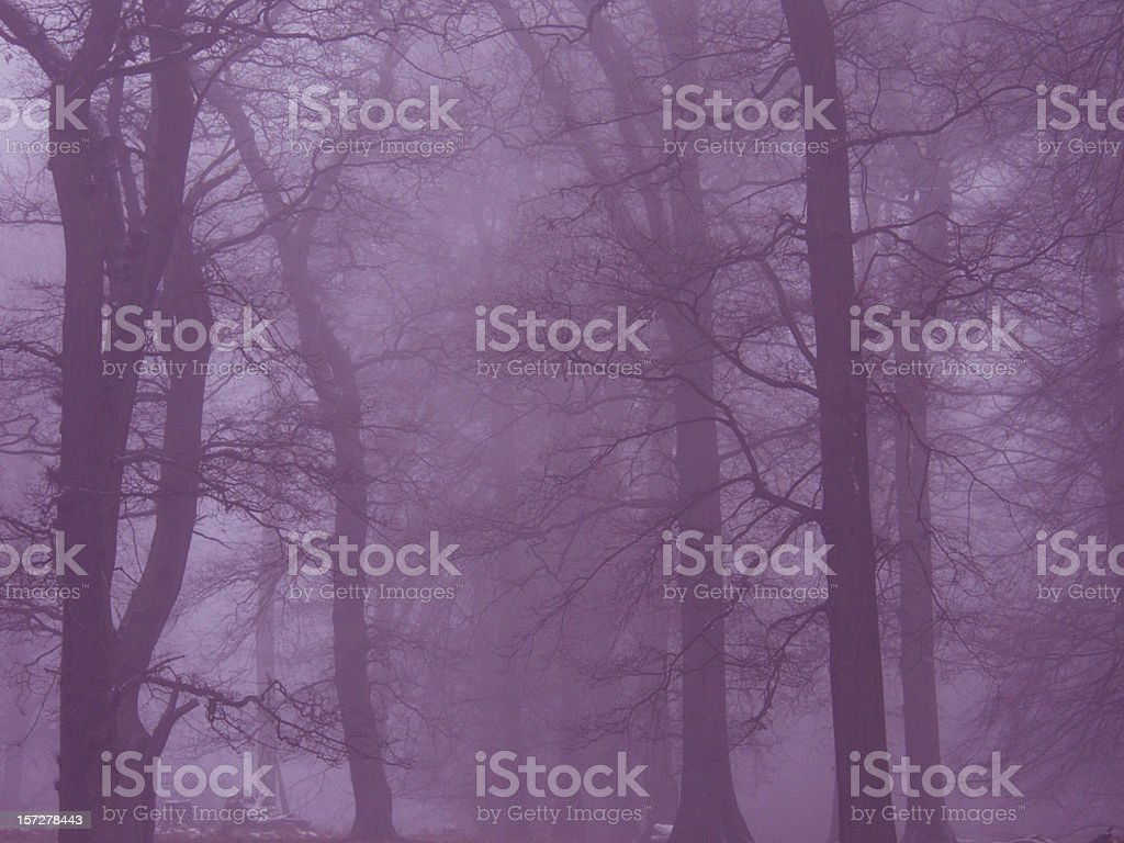 Magical Forest. (Dyrehaven) royalty-free stock photo
