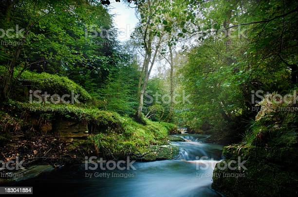 Magical Forest Stream Stock Photo - Download Image Now