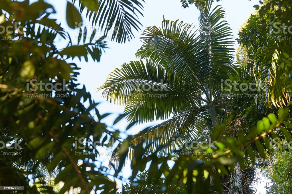magical green leaf in rain forest stock photo