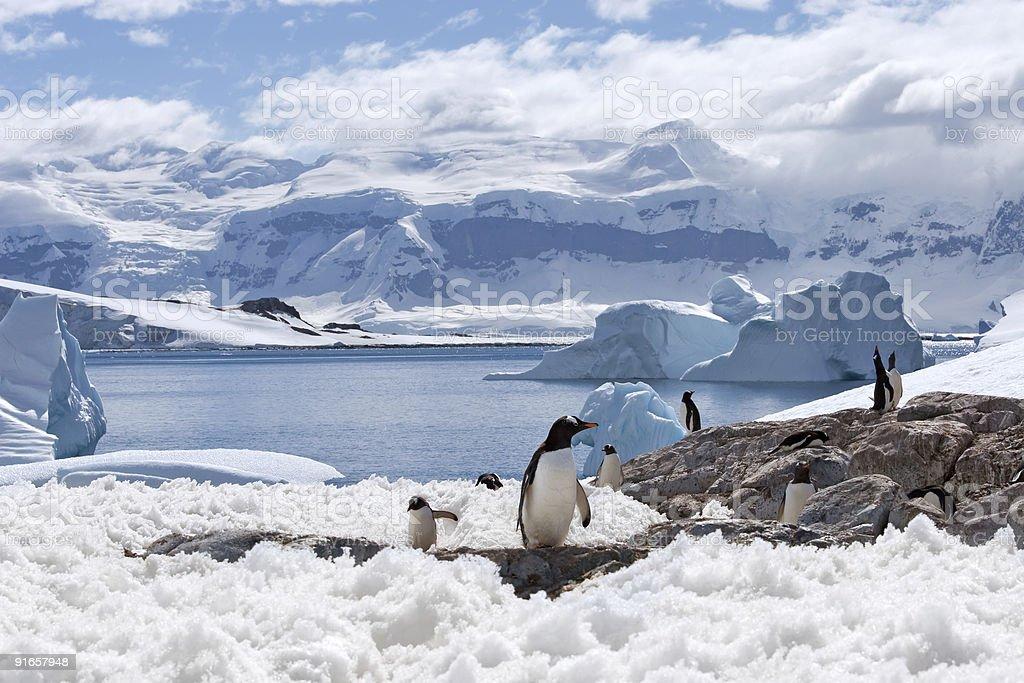 magical home of penguins圖像檔