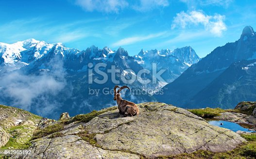 A magical landscape with mountain goat in the middle of the Alps (stress relief, rest, vacation - concept)