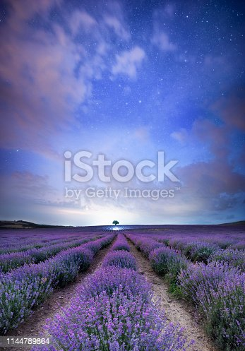 Beautiful night scape of a blooming lavender field with a lonesome tree in the end.
