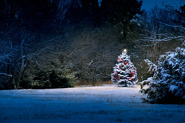 magical light illuminates snow covered christmas tree stock photo - Snow Covered Christmas Trees