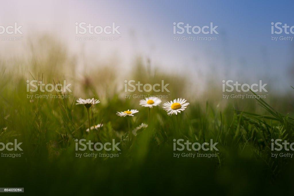 Magical nature stock photo
