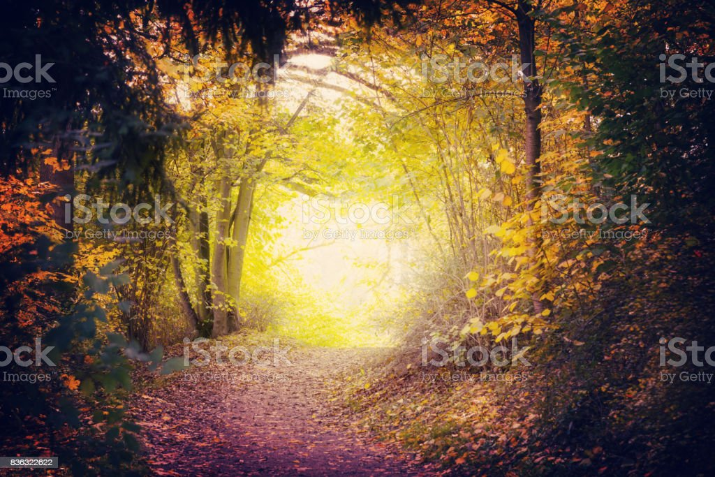 Magical Path In Autumn Park stock photo